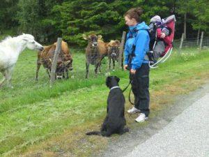 hund gis bort rogaland